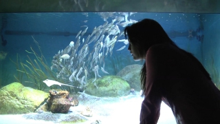 SEA Aquarium at Universal Studios Singapore